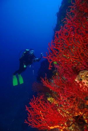 Korfez Diving Center: Kırmızı Mercan