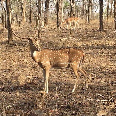 Madhya Pradesh, Indien: photo2.jpg