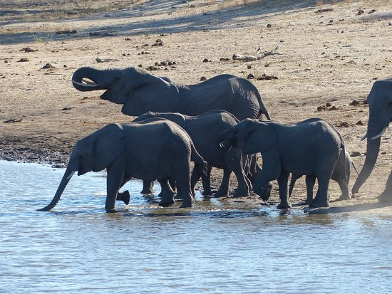 andBeyond Ngala Tented Camp: Family of elephants at the nearby watering hole