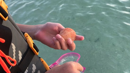 Naples Kayak Adventures: Also visit beaches by kayak, to find your special sea jewels.