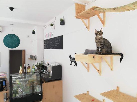 KOTON кошачье кафе: Menu jest pełne smacznych napojów i ciast, które codziennie dostarczają najlepsi lokalni cukiern
