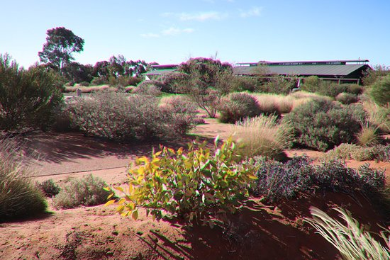 Australian Arid Lands Botanic Garden: Flowers
