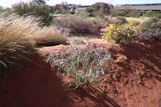 Australian Arid Lands Botanic Garden: Orange dirt