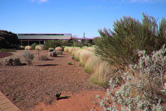 Australian Arid Lands Botanic Garden: Attractive!