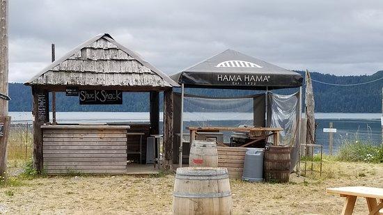 Lilliwaup, WA: Oyster shucking tents.