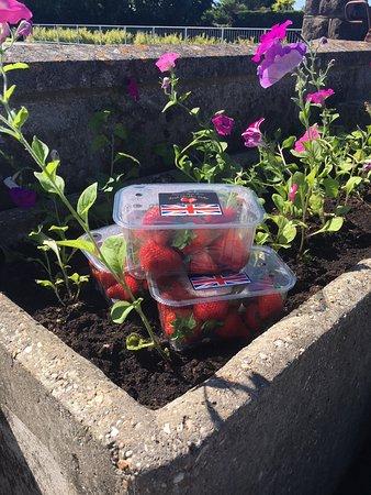 Banwell, UK: Cheddar strawberries!