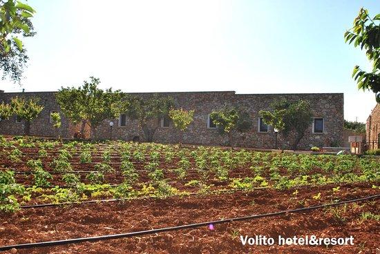 Marina San Gregorio, Italia: Il nostro giardino