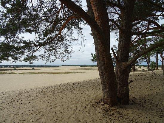 Natuurpoort-Manege van Loon op Zand bij de Loonse Duinen