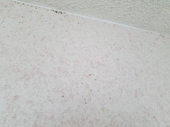 Beach Cove Resort: Mold on walls