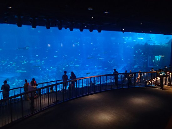 S.E.A. Aquarium: The very large display window