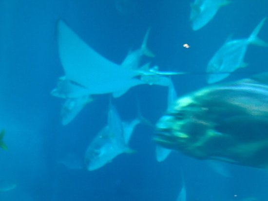 S.E.A. Aquarium: just a display of the various sea animals