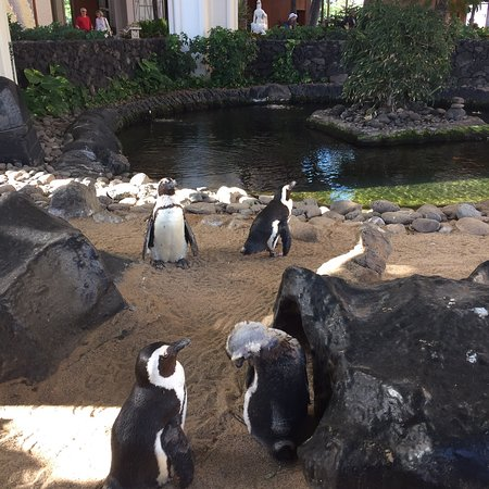 Bilde fra Hyatt Regency Maui Resort and Spa
