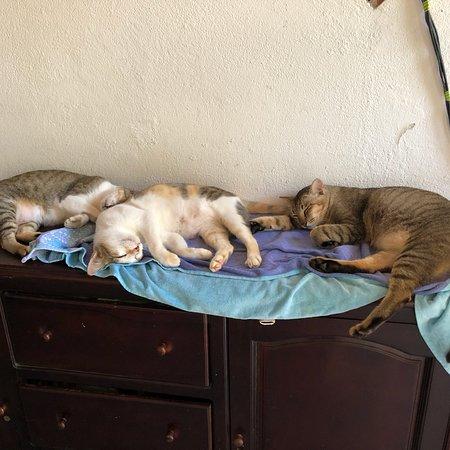 Bilde fra Jack's Cat Cafe