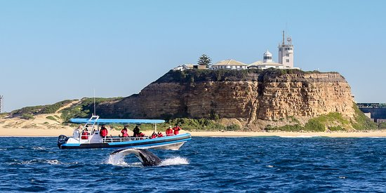 Newcastle, Australia: Whale watching with CoastXP
