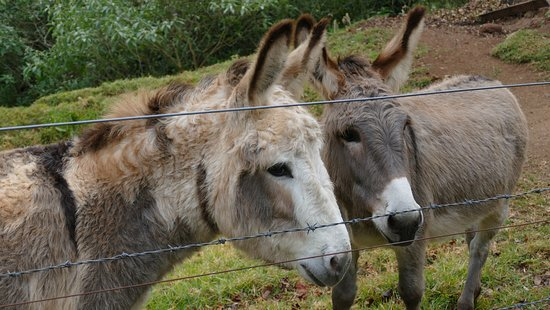 Killarney, Australien: You can feed the donkeys carrots!