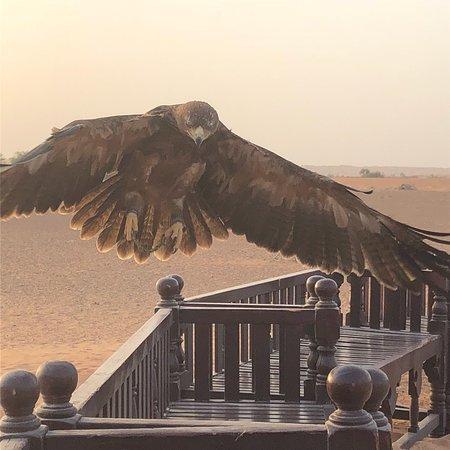 Bilde fra Al Maha, a Luxury Collection Desert Resort & Spa, Dubai