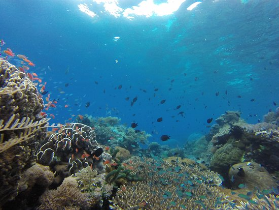 Alor Kecil, Indonesia: Healthy coral and clear water