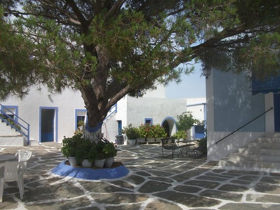 Panagia Kastriani Monastery: Lovely big tree in the centre