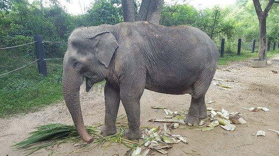 Valokuva: Wildlife Friends Foundation Thailand