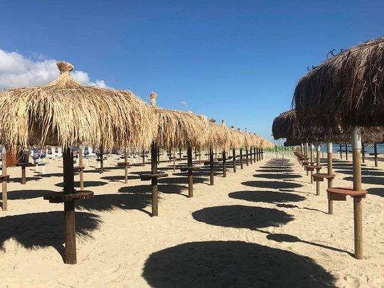 Gente Di Mare Stabilimento Balneare & Ristorante: palmette