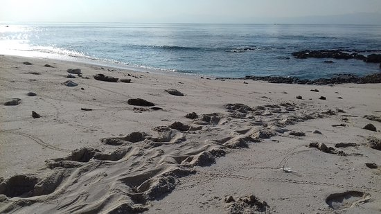 Alor Kecil, Indonesia: Turtle tracks from laying eggs