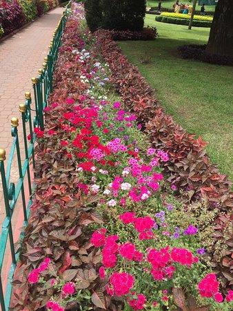 Sim`s Park: flowers