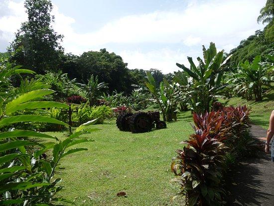 La Pointe Marin: Martinique