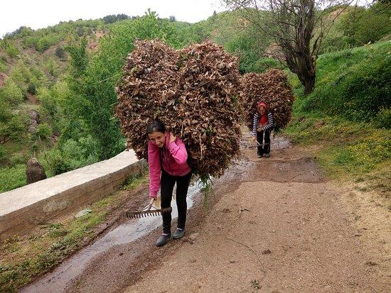 Vie nomade: Les porteuses de Qerret