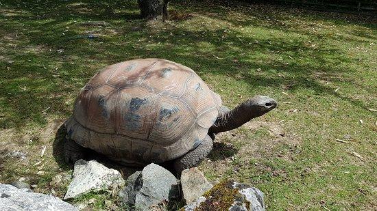 Hopp over linjen: ZooParc de Beauval inngangsbillett: grosse tortue