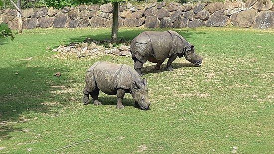Hopp over linjen: ZooParc de Beauval inngangsbillett: Rhinocéros indien