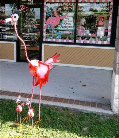 The Official Florida Flamingo Museum: ....