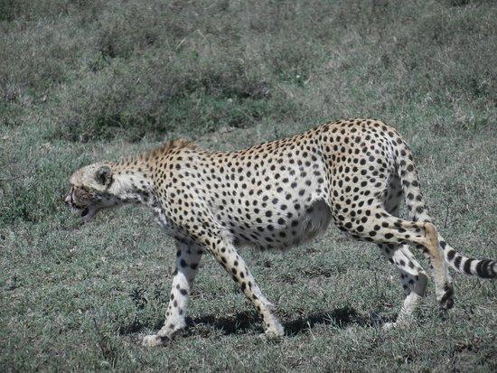 Kichaos Tanzania Safaris