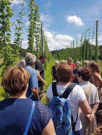Opificio Birrario: Visite des champs de houblon