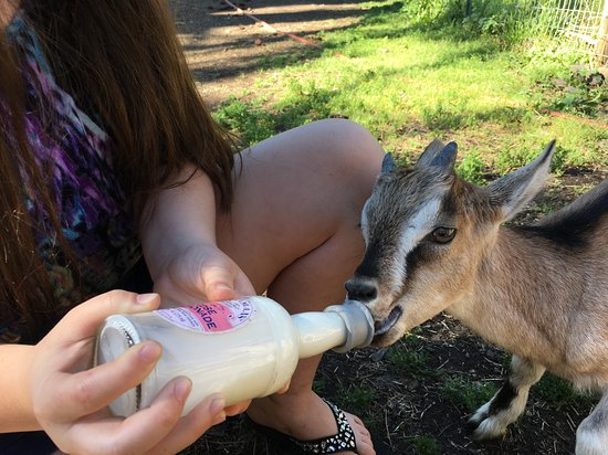 Willow-Witt Ranch: We all enjoyed the animals: from bottle feeding baby goats, petting friendly dogs, seeing deer o
