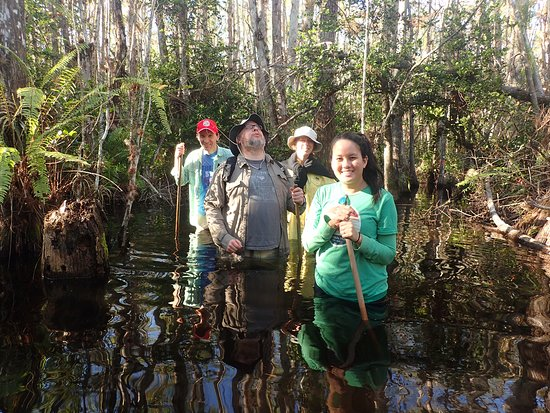 Ochopee, FL: Private Swamp Walk Tours & Private Photo Swamp Safari Tours 7 days a week year round