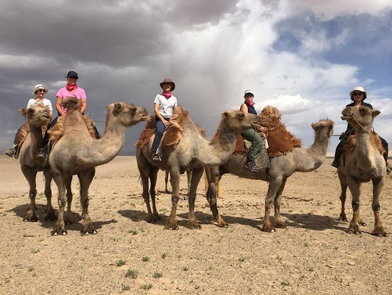 Discover Mongolia Travel Friendly 2 Humped Bactrian Camels