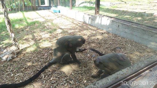 Safari Park: Сафари парк