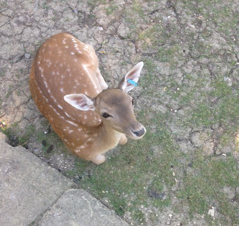 Prinknash Bird And Deer Park Picture
