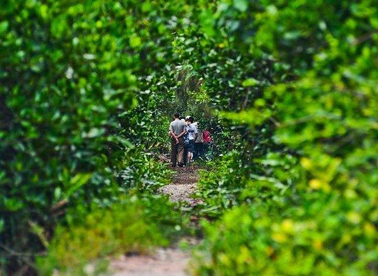 Vintage Junks: Phu Long Mangrove Forest Tours