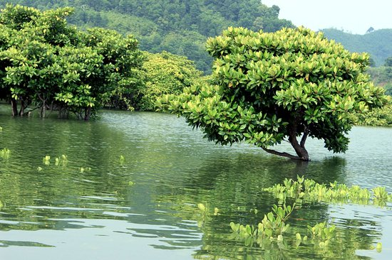 Luxury Travel: Phu Long Mangrove Forest Tours