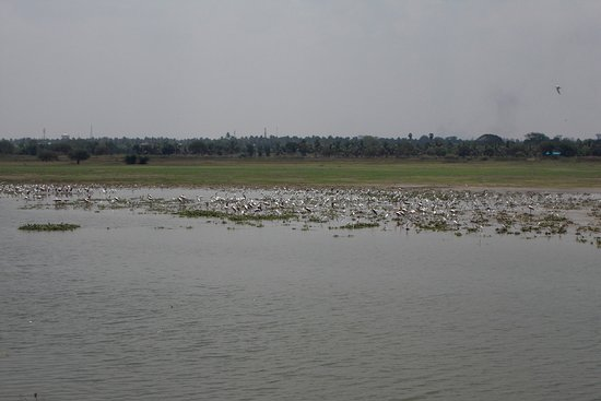 Tiruchirappalli District, India: BIrd Watching Tour