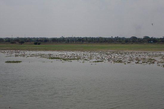 Tiruchirappalli District, Ấn Độ: BIrd Watching Tour