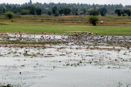 Tiruchirappalli District, Indien: BIrd Watching Tour
