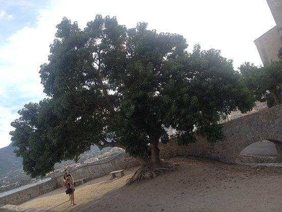 Citadel: Albero nel piazzale sul mare