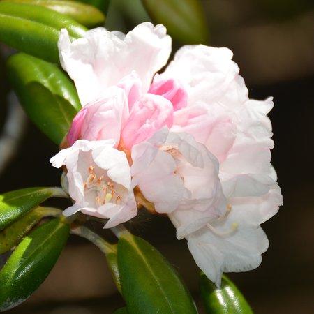 Annapolis Royal Historic Gardens: beautiful spring flowers