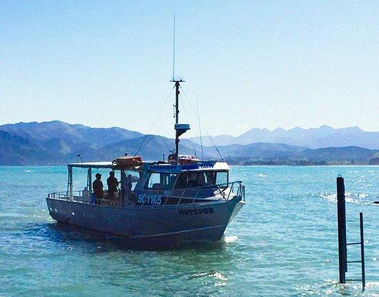 Seamist Fishing Charters