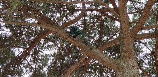 Замок Святого Георгия: Peacock in tree