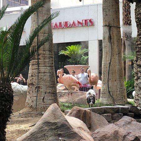 Paradise Garden Buffet Las Vegas Restaurant Reviews