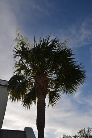 Real palm trees on site!