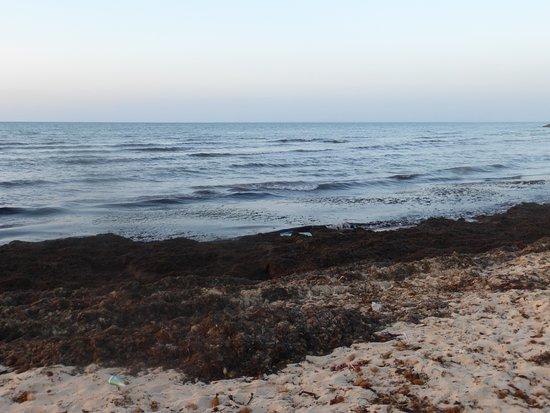 Hotel Djerba Castille: водоросли на пляже